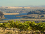 Columbia River Surounded Agriculture  Central Washington  USA