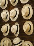Traditional Panama Hats  Cuenca  Ecuador
