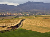 Village of Brinas surrounded by Vineyards  La Rioja Region  Spain