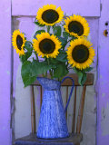 Sunflowers Displayed in Enamelware Pitcher  Willamette Valley  Oregon  USA