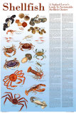 A Seafood Lover's Guide to Sustainable Shellfish Choices