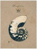 Vintage Linen Nautilus