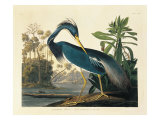 Louisiana Heron Plate 217