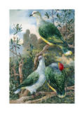 Painting Depicts Three Fruit Pigeons Perched on Tree Branches