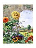 Pot Marigolds  Bellflowers  Daisies  Pansies  Cowslip  Polyanthas
