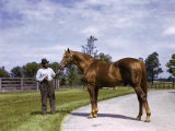 Champion Horse Man-O-War Poses with One of His Grooms