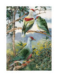 Painting of Three Fruit Pigeons Perched on Branches