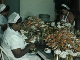 Women Pick and Pack Crab Meat into Cans