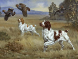 Brittany Spaniels Flush Three Birds from Cover in a Meadow Papier Photo par Walter Weber