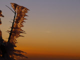 Wind-Blown Icicles on a Tree Branches at Sunset