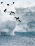 Adelie Penguins Lined Up to Jump from an Iceberg into Chilly Waters Papier Photo par Tom Murphy