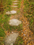 Stone Path Through Woods Lined with Fallen Autumn Leaves  Vermont