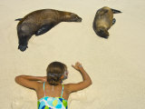 Girl Observing Galapagos Sea Lions Resting on a Beach