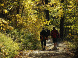 Two Men Walking a Gravel Road Through a Forest