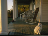 White Cat in Sunlight on a Columned Porch of a Historic Farmhouse