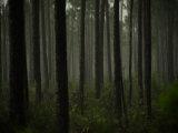 Dense Woodland in Everglades National Park