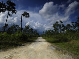 Dirt Road in Everglades National Park