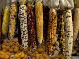 Colorful Indian Corn and Pumpkins Await Halloween
