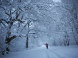 Adult Women Cross-Country Skiing on a Trail Though the Snowy Woods