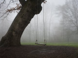 Swing Hanging from a Tree on the Sewanee Campus in the Fog