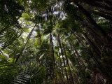 Rain Forest Canopy in Bako National Park