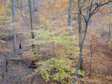 Woman Runs on a Trail Through Eastern Hardwood Forest in the Fall