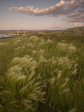 Grasses Growing in the Mono Lake Scenic Area Shot at Sunset