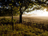Sunlight and Mists Rising from a Farmer's Fields