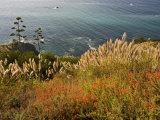 Flowers Overlook the Pacific Ocean in Big Sur  California