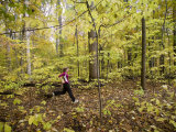 Woman Runs Through the Woods While Exercising in Early Fall