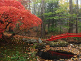 Japanese Maple Garden with Red Bridge