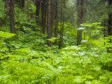 Lush Vegetation During Rain  Mendenhall Glacier  Alaska