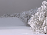 Snow-Blanketed Trees in Germany's Black Forest