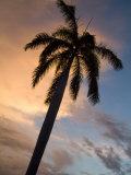 Palm Tree Silhouette at Twilight