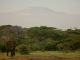 African Elephant in African Landscape with Mount Kilimanjaro Backdrop