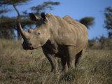 Rhinoceros in Samburu National Reserve