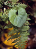 Fern Frond and a Heart-Shaped Leaf in a Shady Woodland Setting