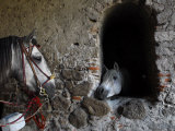 Horses Eyeing One Another Through a Window in a Stone Wall