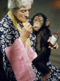 Young Chimpanzee Sips Medicine Administered by Elderly Woman