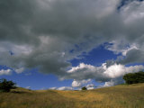 Trees on a Hill under a Clear Blue Sky with Puffy Clouds