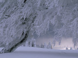 Snow-Blanketed Trees in a Fairy Tale Winter Landscape