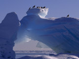 Kittiwakes Resting Atop an Iceberg with a Natural Arch