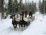 Loggers Haul Freshly Cut Timber on a Horse-Drawn Sleigh