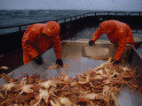 Crab Fishermen Sorting their Catch on the Deck