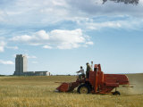 Men Driving Combine Harvest Wheat Near State Capitol Building