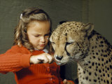 Cheetah Licks Ice Cream from a Spoon Held by a Young Girl