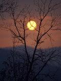 Sunrise over Mountains Viewed Through an Oak Forest