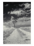 Roadside with Tree