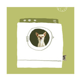 Dog in Dryer