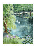 Two Swans on a Pond